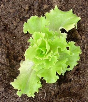 tratamiento de litiasis de acido urico es malo el pepino para el acido urico que alimentos son buenos para eliminar el acido urico
